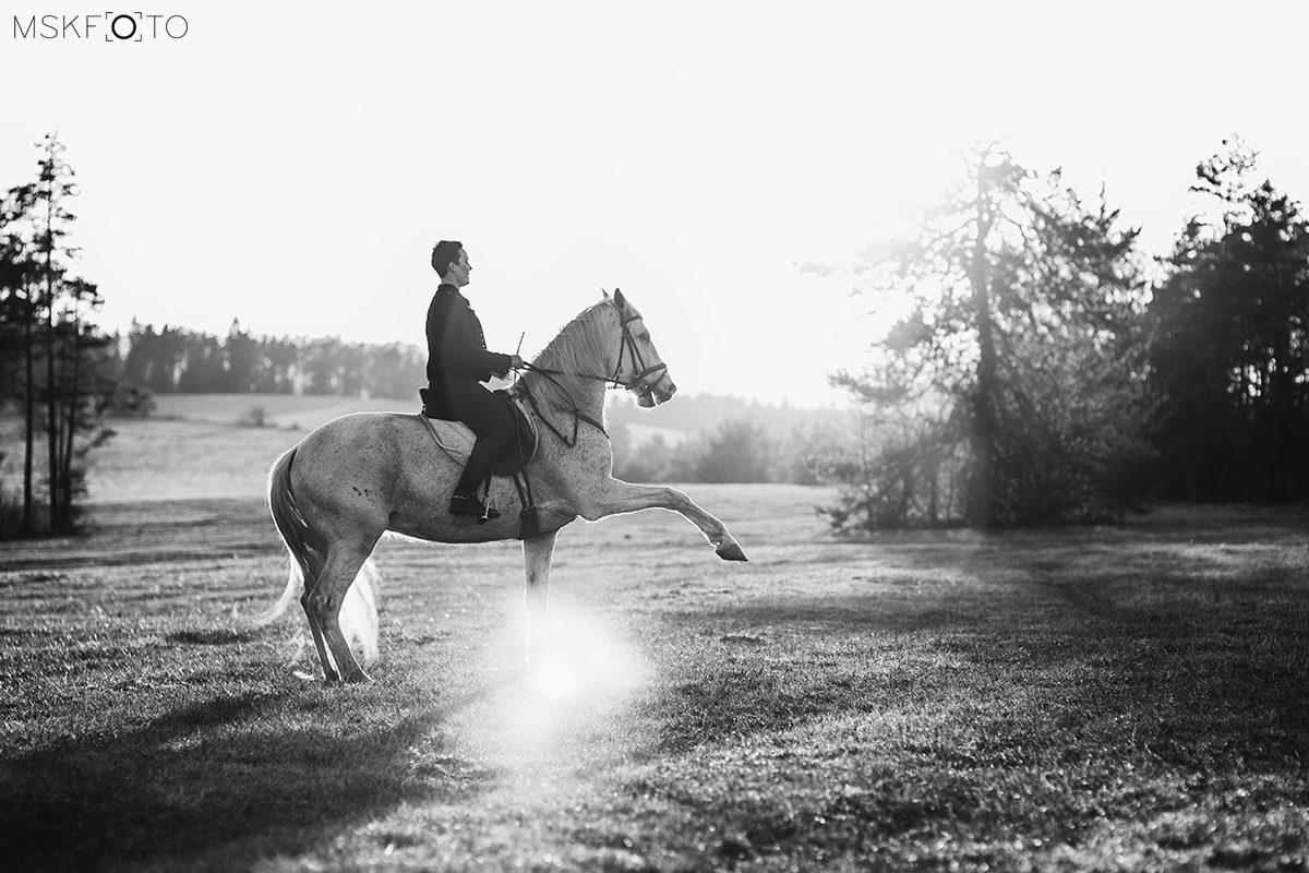 Sesje jeździeckie